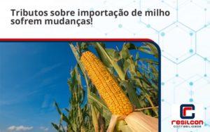 Tributos Sobre Importação De Milho Sofrem Mudanças! Resilcon - Resilcon - Contabilidade em São Paulo